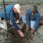 R. L. Winters supervising vine installation