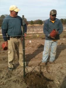 Vine Planting RL Supervision