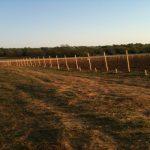 West Texas startup vineyard.